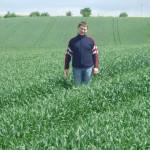 Plony zbóż zapowiadają się bardzo dobre (Na zdjęciu plantacja pszenżyta ozimego).
