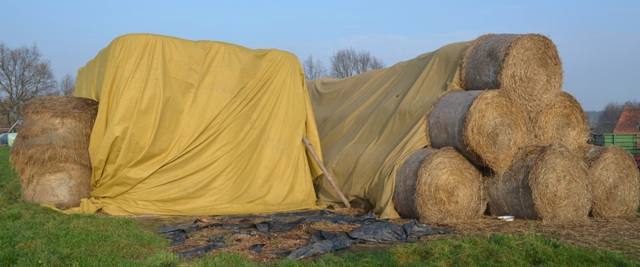 Zapas sianokiszonki, słomy i siana wystarczający do kolejnych zbiorów, przykryty agrowłókniną.